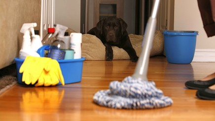 Keeping a Pet-Friendly Home Clean
