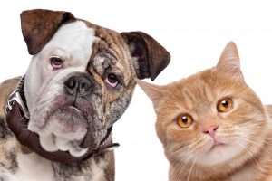 Own Pets? You May Need More Frequent Cleaning