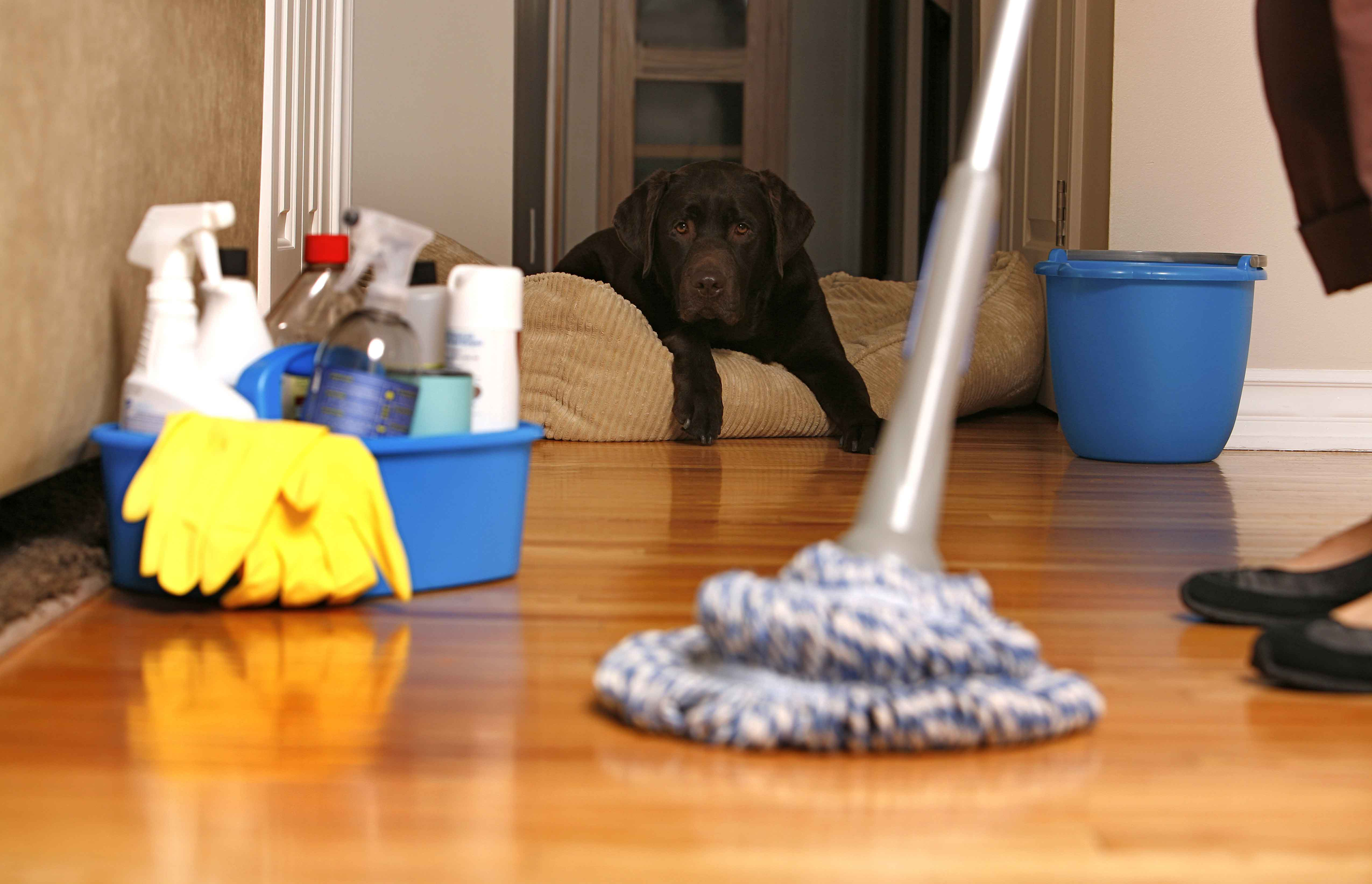 Keeping A Pet Friendly Home Clean